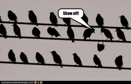 lolbird_funny-pictures-bird-shows-off.jpg
