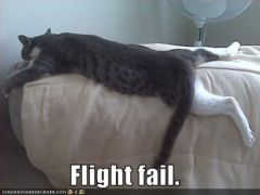 lolcat_flightfail