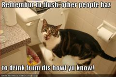 lolcat_funny-pictures-cat-asks-you-to-flush.jpg