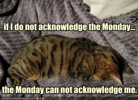 lolcat_funny-pictures-cat-does-not-acknowledge-monday.jpg