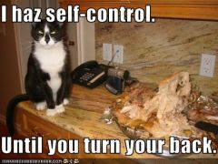 lolcat_funny-pictures-cat-has-self-control-sort-of.jpg