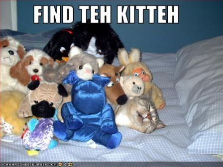 lolcat_funny-pictures-cat-is-hiding.jpg