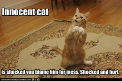 lolcat_funny-pictures-cat-is-innocent-and-hurt
