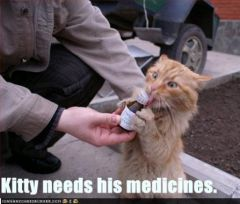 lolcat_funny-pictures-cat-needs-his-medicine2.jpg