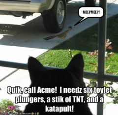 lolcat_funny-pictures-cat-needs-to-call-acme