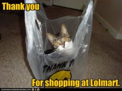 lolcat_funny-pictures-cat-says-thank-you.jpg