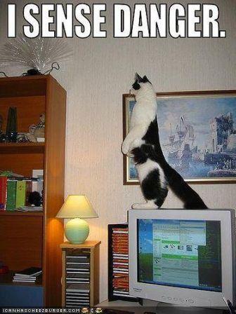 lolcat_funny-pictures-cat-senses-danger.jpg