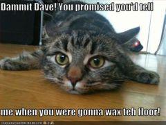 lolcat_funny-pictures-cat-slips-on-floor.jpg