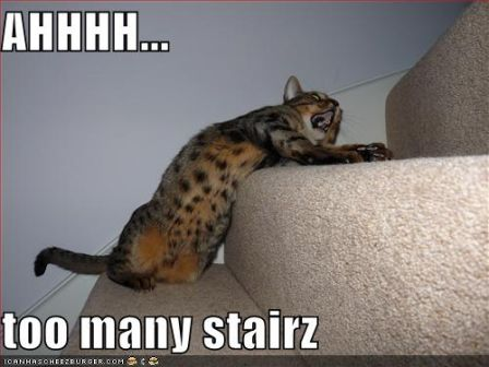 lolcat_funny-pictures-cat-wants-fewer-stairs.jpg