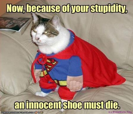 lolcat_funny-pictures-cat-will-kill-an-innocent-shoe.jpg