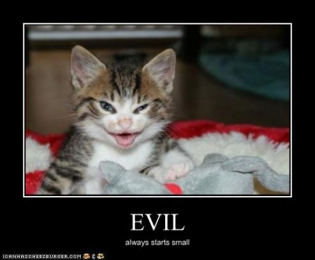 lolcat_funny-pictures-kitten-is-evil