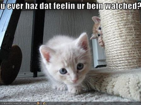 lolcat_funny-pictures-kitten-is-watched