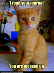 lolcat_funny-pictures-kitten-read-your-journal.jpg