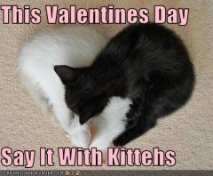 lolcat_funny-pictures-kittens-sleep-in-heart-shape.jpg