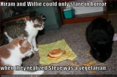 lolcat_funny-pictures-one-cat-is-vegetarian.jpg