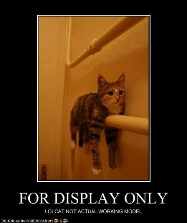lolcat_funny-pictures-this-lolcat-is-for-display-only