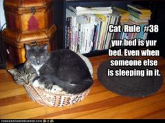 lolcat_funny-pictures-two-cats-are-in-a-bed.jpg