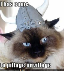 lolcat_funny-pictures-village.jpg