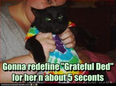 lolcat_grateful.jpg