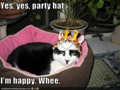 lolcat_party-hat.jpg