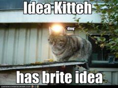 lolcat_pictures-cat-has-an-idea