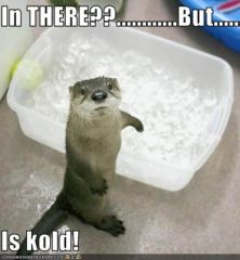 lolotter_funny-pictures-otter-does-not-want-an-ice-bath.jpg
