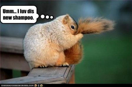 lolquirrel_funny-pictures-squirrel-loves-new-shampoo.jpg
